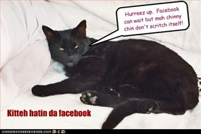 Kitteh hatin da facebook