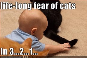 life-long fear of cats  in 3...2...1...