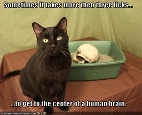 Sometimes it takes more then three licks...  ...to get to the center of a human brain.