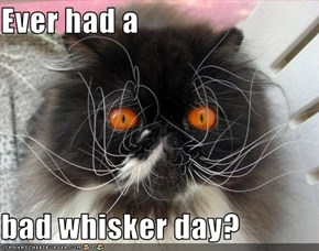 Ever had a  bad whisker day?
