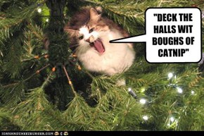 """DECK THE HALLS WIT BOUGHS OF CATNIP"""