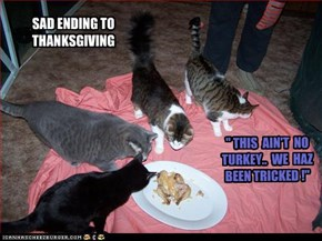 """ THIS  AIN'T  NO TURKEY..  WE  HAZ BEEN TRICKED !"""