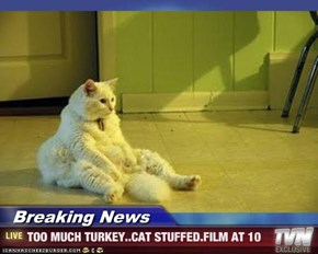 Breaking News - TOO MUCH TURKEY..CAT STUFFED.FILM AT 10