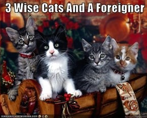 3 Wise Cats And A Foreigner