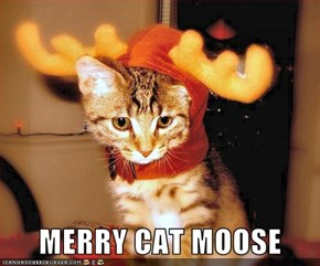 MERRY CAT MOOSE
