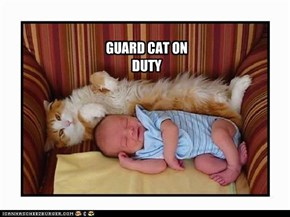 GUARD CAT ON DUTY