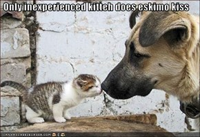 Only inexperienced kitteh does eskimo kiss