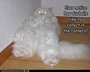 Ever notice how furballs like to collect in the corners?