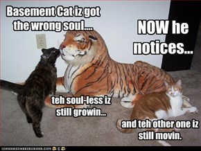 Basement Cat iz got the wrong soul....