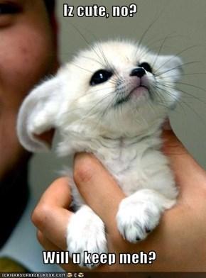 Iz cute, no?  Will u keep meh?