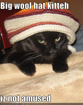 Big wool hat kitteh  iz not amused