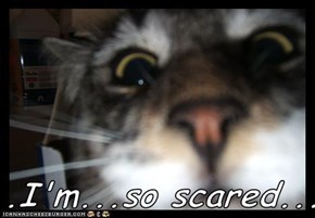 ...I'm...so scared...