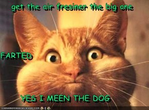 get the air fresiner the big one  FARTED       YES I MEEN THE DOG