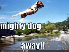 mighty dog away!!