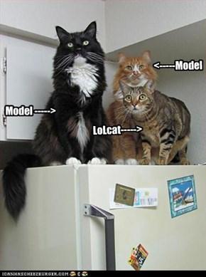 Model ----->