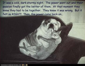 It was a cold, dark stormy night.  The power went out and their  passion finally got the better of them.  At that moment they knew they had to be together.  They knew it was wrong.  But it felt so RIGHT!  Then, the power came back on...