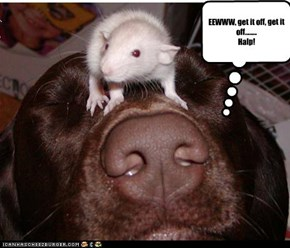EEWWW, get it off, get it off........ Halp!