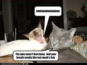 The joke wasn't that funny.  And your breath smells like last week's fish.