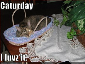 Caturday  I luvz it.