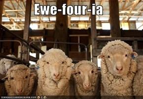 Ewe-four-ia