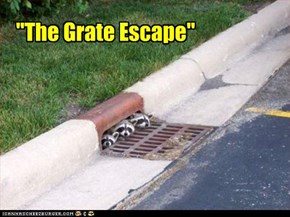 """The Grate Escape"""