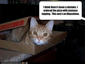 I think there's been a mistake. I ordered the pizza with siamese topping.  This one's an Abyssinian.