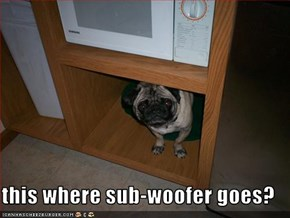 this where sub-woofer goes?