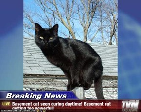 Breaking News - Basement cat seen during daytime! Basement cat getting too powerful!