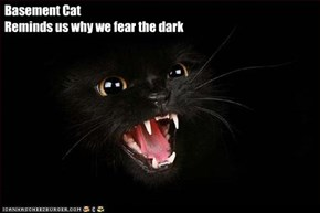 Basement Cat  Reminds us why we fear the dark