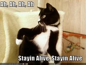 Ah, Ah, Ah, Ah  Stayin Alive, Stayin Alive