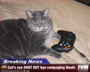 Breaking News - Cat's eye SHOT OUT bye rampaging Noob!