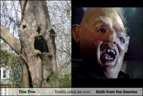 This Tree Totally Looks Like Sloth from the Goonies