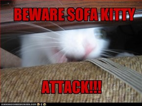 BEWARE SOFA KITTY