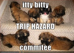 itty bitty TRIP HAZARD commitee