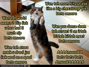 Kitteh Idol presentz Muffin and Datz Amoora