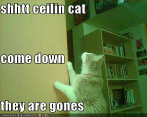 shhtt ceilin cat come down they are gones