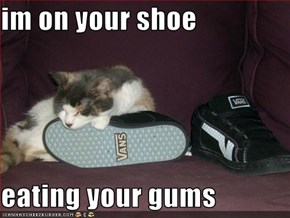 im on your shoe  eating your gums