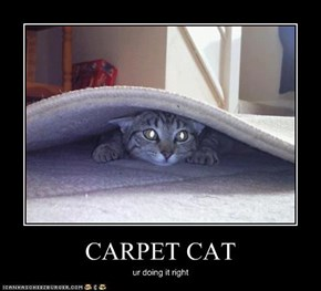 CARPET CAT