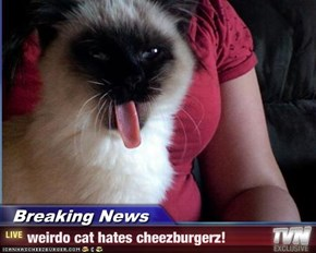 Breaking News - weirdo cat hates cheezburgerz!