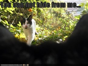 You can not hide from me...