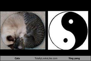 Cats Totally Looks Like Ying yang