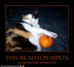 THIS BE MAH PUMPKIN