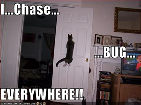 I...Chase... ...BUG... EVERYWHERE!!