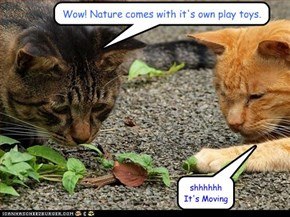 Wow! Nature comes with it's own play toys.