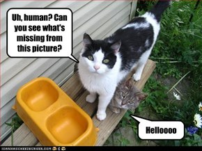 Uh, human? Can you see what's missing from this picture?