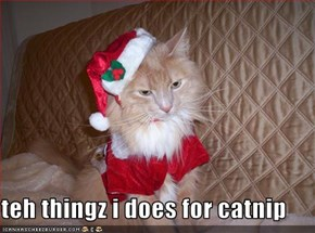 teh thingz i does for catnip