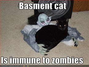Basment cat  Is immune to zombies