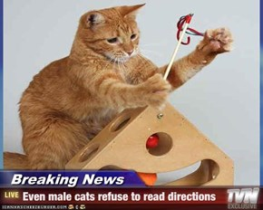 Breaking News - Even male cats refuse to read directions