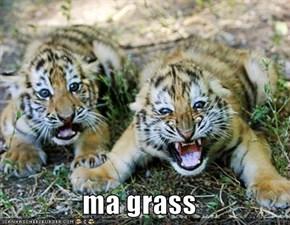 ma grass