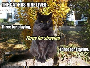 THE CAT HAS NINE LIVES: